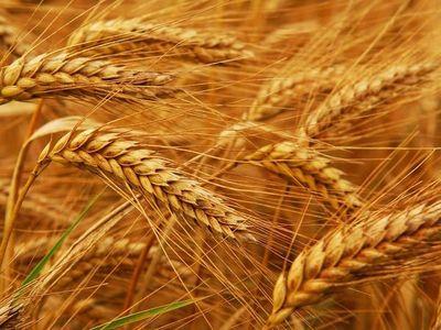 Argentina preocupada por el acuerdo Brasil-EEUU por trigo sin arancel