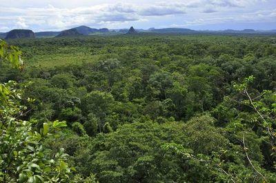 21 de marzo: Día internacional de los bosques