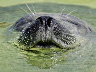 """La falta de oxígeno en los océanos, una """"plaga"""" que arrasa la vida marina"""