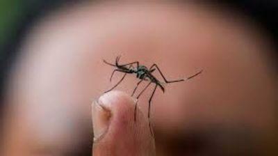 300 casos confirmados de dengue