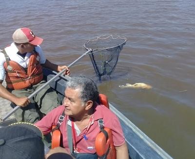Verifican mortandad de peces en Concepción