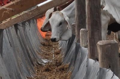 Ante la baja del ganado, el Parlamento le pide explicaciones a la Cámara de Carne
