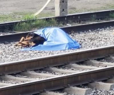 Un perro se niega a abandonar a su dueño quien acababa de sufrir un accidente