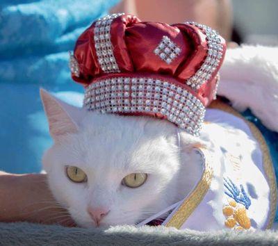 """Hoy """"Gatotón"""" para ayudar a felinos, en la Costanera"""