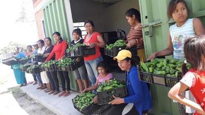 San Lázaro: Indígenas cosechan pimientos con exito