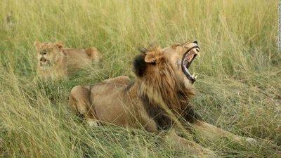 Cazador furtivo fue asesinado por elefante y devorado por leones