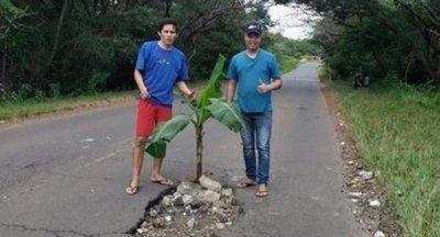 Jóvenes colocan planta de banana en enorme bache