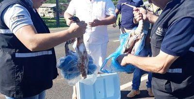 San Pedro: decomisan animales silvestres faenados