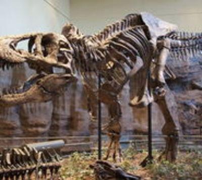 Curiosa oferta: Encontró fósil de tiranosaurio y lo vende en Internet