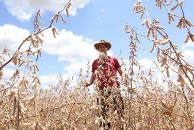 El 30% de sojeros está en un proceso de refinanciación