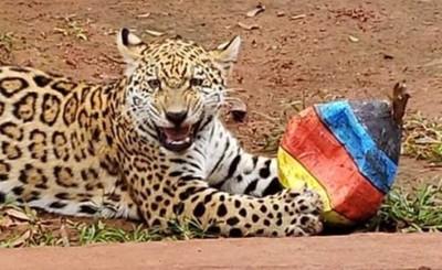 Animales de Itaipu tuvieron su agasajo por Pascuas