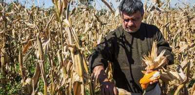 Modernización de la agricultura genera ingresos por US$ 5,3 millones para familias productoras