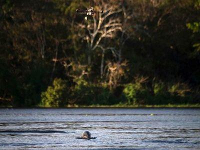 Santuarios de biodiversidad mundial bajo amenaza en Brasil