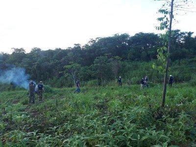 Destruyen 6 hectáreas de marihuana en predio de alemán desaparecido