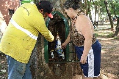 El misterio del árbol que venció la inseguridad