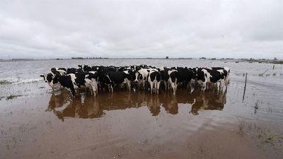 Chaco: 4 millones de ganado en peligro por las inundaciones