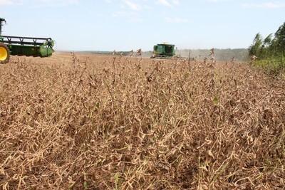 US$ 1.160 millones menos por exportación de la soja