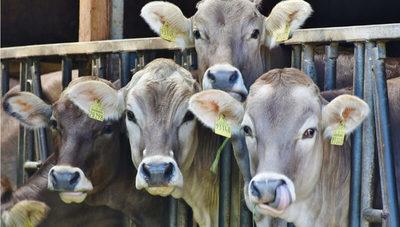 Ciavet, una empresa comprometida con la salud y el bienestar animal