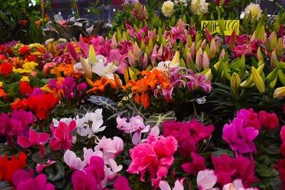 Realizan feria de flores y plantas ornamentales