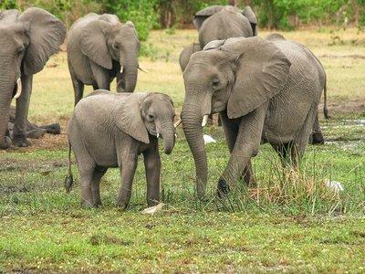 Caza acabará con 40% de grandes mamíferos de áreas tropicales