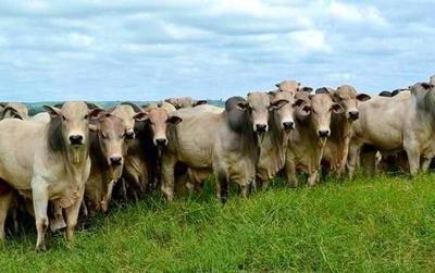 Importante suba del ganado en Uruguay en Paraguay hubo una leve baja