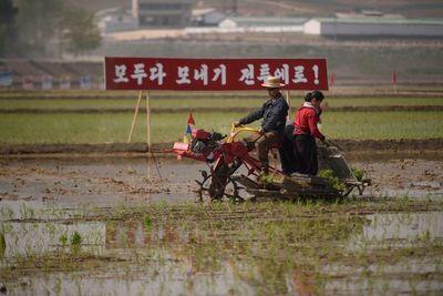 """Sequía """"extrema"""" en Corea del Norte, riesgo de hambruna"""