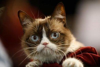 Adiós a Grumpy Cat