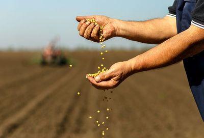 Merma en la última campaña de la soja fue del 23,5%