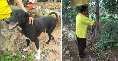 Un bebé fue enterrado vivo por su madre y un perro lo encontró y lo salvó