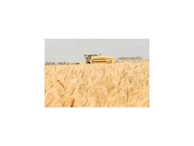 La crisis en el campo se extenderá al trigo y al maíz