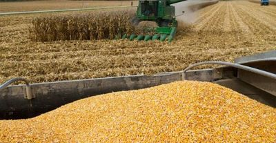 Argentina proyecta una cosecha histórica de maíz