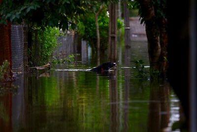 Brindan recomendaciones a tener en cuenta con las mascotas durante inundaciones