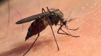 Menor fallece a causa de dengue