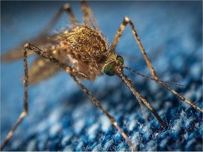 Investigan muerte de un niño por posible dengue