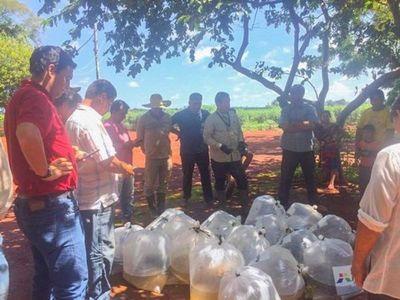 Itaipu dona 1.500 ´peces juveniles para reactivar rubro de consumo
