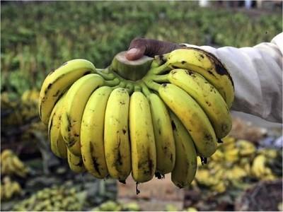 Se manifestarán por incumplimiento de ley que incluye banana en merienda escolar