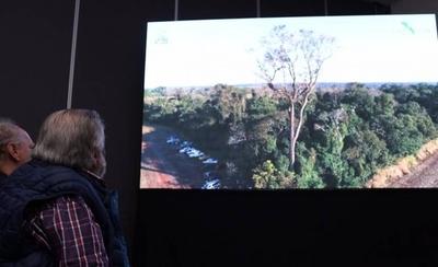 HOY / Por octavo año consecutivo, emprenden la búsqueda del árbol más grande del país