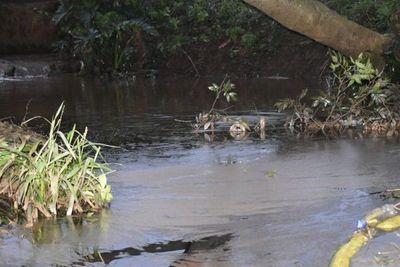 Pobladores de Itauguá denuncian muerte de peces en arroyo Aveiro