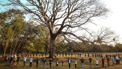 Colosos de la Tierra: Todos podemos salvar un árbol, buscá el tuyo