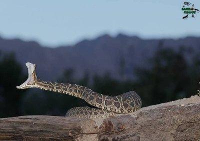 Serpientes: ¿Son peligrosas?