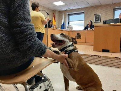 Condenan a dueño de perra citada a un juicio en España
