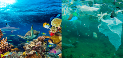 El día mundial de los Océanos y la guerra al plástico