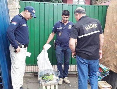 Rescatan animales silvestres de mercado de San Lorenzo