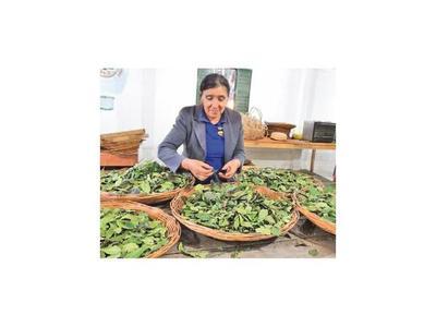 Paraguaya es nominada por cultivo sostenible de yerba