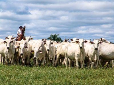 Señalan necesidad de una política de posicionamiento de la carne