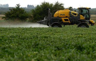 """Greenpeace denuncia que """"adicción"""" europea a soja OGM desforesta América Latina"""