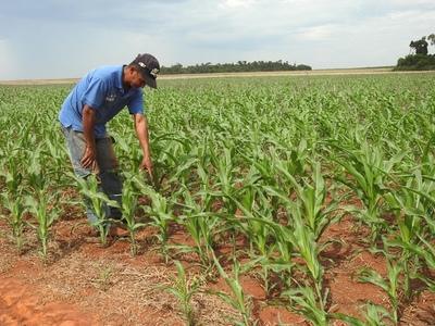 MAG destinará US$ 250 millones para dinamizar la economía agropecuaria