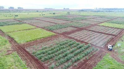 Restauración forestal es objetivo primordial para Itaipú