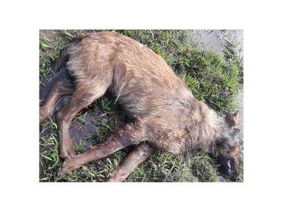 Adolescente mató a escopetazos a un perro