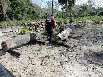 Propiedad fue intervenida por desmonte de un área boscosa nativa